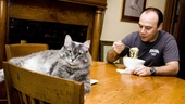 Follies star Danny Burstein sits down for a pre-show meal presided over by his well-fed pet cat, Blue.