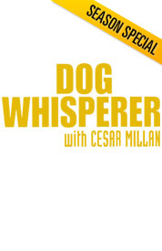 Poster for The Dog Whisperer - Cesar Milan